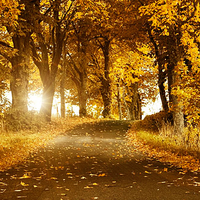 有多少繁花满枝,就会有多少秋叶零落。