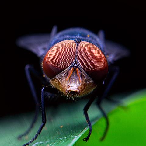 有缺点的战士终竟是战士,完美的苍蝇也终竟不过是苍蝇。
